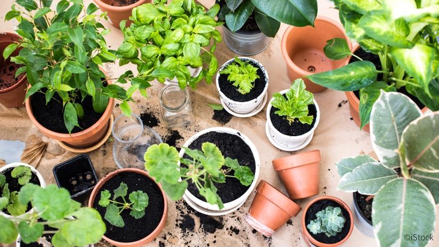 Dein Erster Gemüse Und Kräutergarten Auf Dem Balkon Flatfox